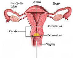 Loop biopsy of the cervix